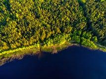Opinión del abejón, bosque de la costa costa en la costa Fotos de archivo libres de regalías