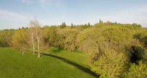 Opinión del abejón sobre árboles con las nubes del blanco del cielo azul almacen de metraje de vídeo