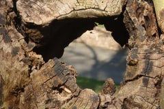 Opinión del agujero del árbol Imagen de archivo libre de regalías