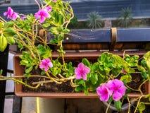 Opinión del balcón de flores rosadas hermosas y de las calles de la ciudad imagen de archivo