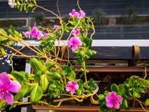 Opinión del balcón de flores rosadas hermosas y de las calles de la ciudad imagen de archivo libre de regalías