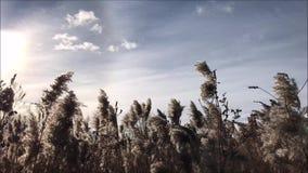Opinión del barrido del paisaje de los edificios agrícolas y de los campos en invierno metrajes
