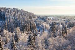 Opinión del bosque del invierno fotografía de archivo