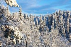 Opinión del bosque del invierno fotos de archivo
