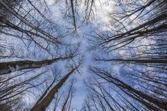 Opinión del bosque del invierno - ojo de pescados Foto de archivo libre de regalías
