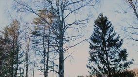 Opinión del bosque del invierno por la tarde almacen de video