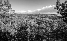 Opinión del bosque en Finlandia Fotos de archivo libres de regalías