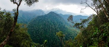 Opinión del bosque en parque nacional de PANACAM en Honduras fotos de archivo libres de regalías