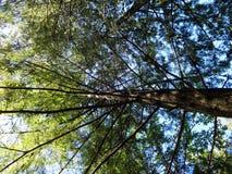 Opinión del cielo en las ramas de un árbol viejo Imagen de archivo libre de regalías