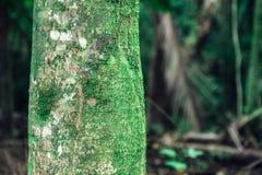Opinión del cierre del tronco de palmera en el bosque tropical de Oahu fotografía de archivo libre de regalías