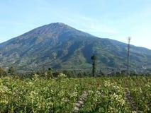 Opinión del día sobre el volcán Merapi del campo, Indonesia Foto de archivo
