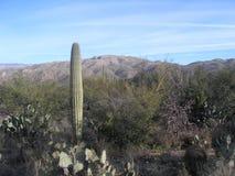Opinión del desierto Imagen de archivo libre de regalías