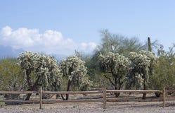 Opinión del desierto con la cerca de madera en el primero plano imagenes de archivo