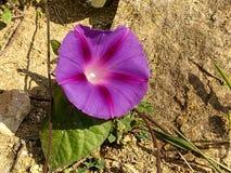 Opinión del detalle, flores púrpuras imagenes de archivo