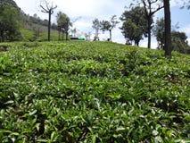 Opinión del enfoque del cierre del jardín de té de abajo del jardín de té Imagen de archivo
