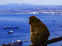 Opinión del fondo la ciudad y el mono rojo de la altura de la roca de Gibraltar Fotos de archivo libres de regalías