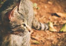 Opinión del gato foto de archivo