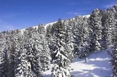 Opinión del invierno Fotografía de archivo libre de regalías