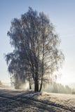 Opinión del invierno del árbol de abedul cubierta con helada Fotografía de archivo