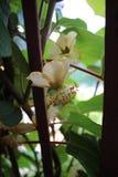 Opinión del kiwi de mi terraza orgánica imágenes de archivo libres de regalías