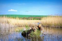 Opinión del lago Srebarna Fotografía de archivo libre de regalías