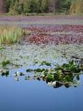 Opinión del lago, Vancouver, Canadá imagen de archivo libre de regalías