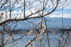 Opinión del lanscape de Fuji con un lago del kawaguchiko Fotos de archivo