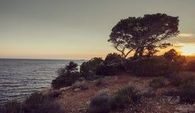 Opinión del mar de Idillic con el pequeño pino en la roca en la luz en la isla de Ibiza - imagen de la puesta del sol foto de archivo