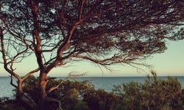 Opinión del mar de Idillic con el pequeño pino en la roca en la luz en la isla de Ibiza - imagen de la puesta del sol imagen de archivo