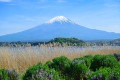 Opinión del monte Fuji del parque de Oishi en el lago Kawaguchiko fotografía de archivo