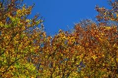 Opinión del ojo de los gusanos de las hojas de otoño Imágenes de archivo libres de regalías