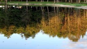 Opinión del otoño de árboles y de la reflexión en el agua almacen de video