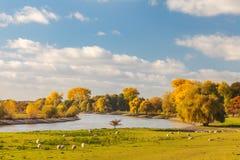 Opinión del otoño del río holandés IJssel entre Arnhem y Zutphen Foto de archivo