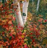 Opinión del otoño en bosque Imágenes de archivo libres de regalías