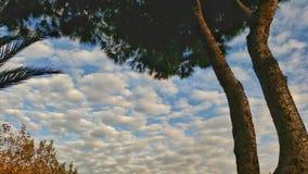 Opinión del otoño en la última hora de la tarde Foto de archivo
