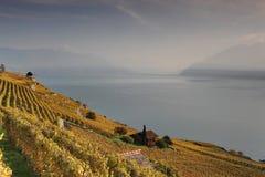 Opinión del otoño sobre el lago Lemán de las vides de Lavaux Imagen de archivo libre de regalías