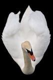 Opinión del pájaro un cisne Fotografía de archivo libre de regalías