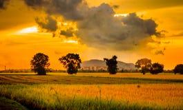 Opinión del paisaje del campo de arroz imagen de archivo libre de regalías