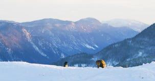 Opinión del paisaje con el águila de oro que come en un animal muerto en montañas en el invierno almacen de metraje de vídeo