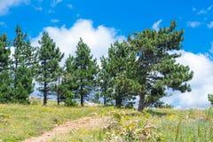 Opinión del paisaje de la montaña de Ai-Petri de la meseta Fotografía de archivo