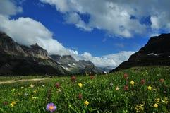 Opinión del paisaje de la naturaleza de Logan Pass Panoramic de flores salvajes y de montañas fotos de archivo