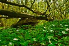 Opinión del paisaje del bosque del verano Imagen de archivo