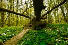Opinión del paisaje del bosque del verano Foto de archivo libre de regalías
