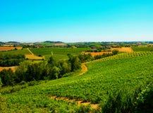 Opinión del paisaje del viñedo Foto de archivo