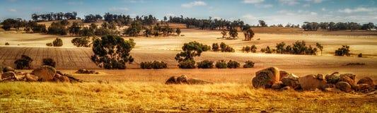 Opinión del panorama de los prados del trigo imagen de archivo libre de regalías