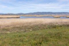 Opinión del pantano Foto de archivo libre de regalías