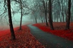 Opinión del parque del otoño Paisaje del otoño del parque de niebla del otoño con las hojas de otoño caidas rojas Imagen de archivo
