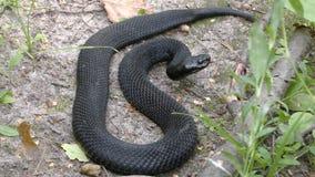 Opinión del perfil de la serpiente de la víbora sobre la tierra foto de archivo