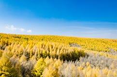 Opinión del prado con las hojas de oro en el otoño Fotografía de archivo