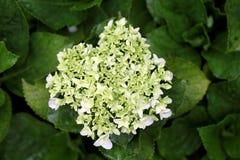 Opinión del primer de flores minúsculas Imagen de archivo